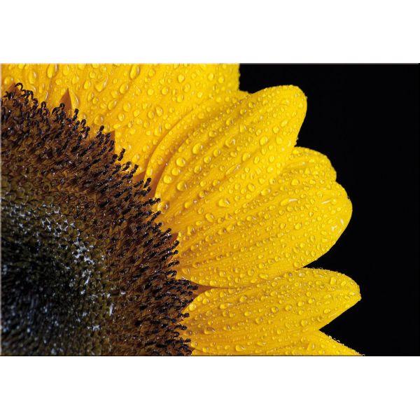 Quadro moderno su tela Sun Flower | Quadri di fiori