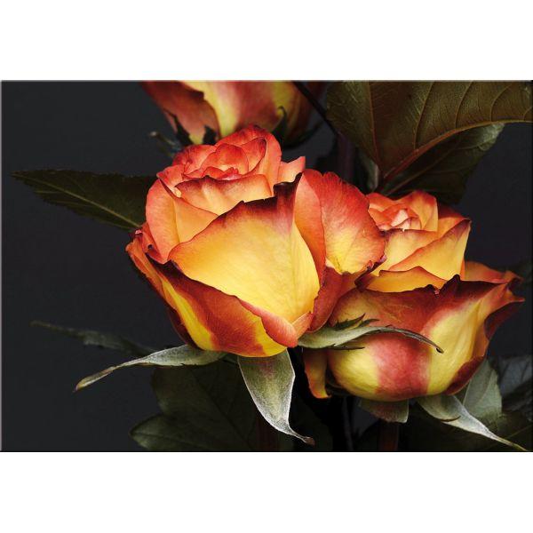 Stampa su tela per arredamento soggiorno Rosatea | Quadri di fiori