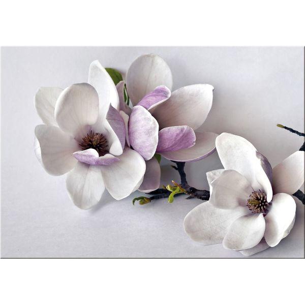 Quadro moderno con fiori bianchi Branch | Quadri con fiori