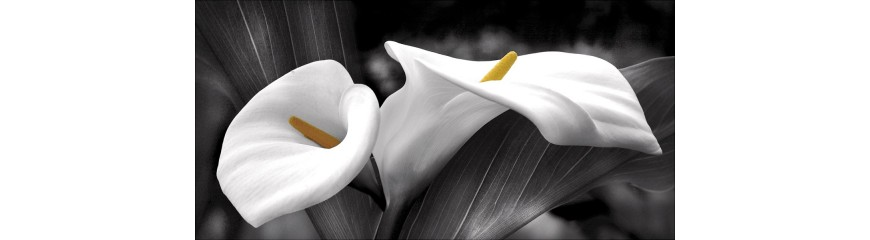 Quadri floreali | Quadri fiori moderni